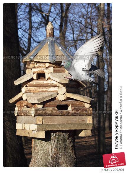 Голубь у кормушки, фото № 209901, снято 26 февраля 2008 г. (c) Галина Ермолаева / Фотобанк Лори