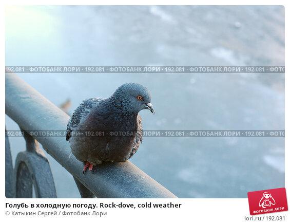 Голубь в холодную погоду. Rock-dove, cold weather, фото № 192081, снято 3 января 2008 г. (c) Катыкин Сергей / Фотобанк Лори