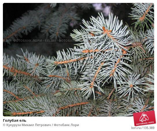 Голубая ель, фото № 135389, снято 13 июля 2005 г. (c) Кукуруза Михаил Петрович / Фотобанк Лори