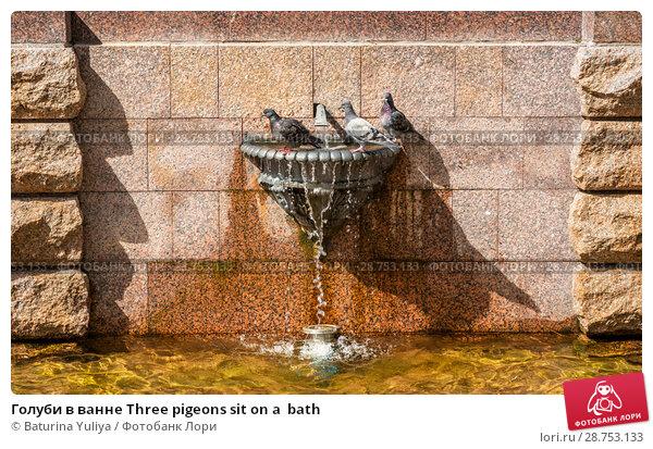 Купить «Голуби в ванне Three pigeons sit on a  bath», фото № 28753133, снято 7 июля 2018 г. (c) Baturina Yuliya / Фотобанк Лори