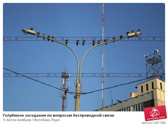 Голубиное заседание по вопросам беспроводной связи, фото № 167769, снято 6 января 2008 г. (c) Антон Алябьев / Фотобанк Лори