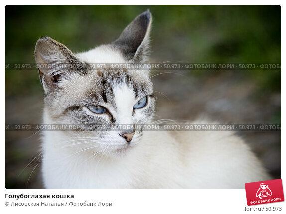 Голубоглазая кошка, фото № 50973, снято 4 июня 2007 г. (c) Лисовская Наталья / Фотобанк Лори