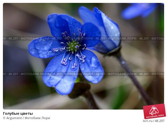 Голубые цветы, фото № 48297, снято 9 мая 2005 г. (c) Argument / Фотобанк Лори