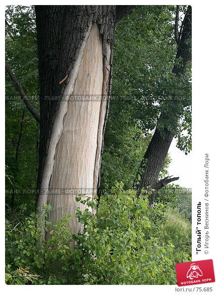 """""""Голый"""" тополь, фото № 75685, снято 25 августа 2007 г. (c) Игорь Веснинов / Фотобанк Лори"""