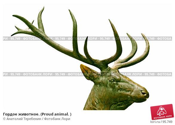 Гордое животное. (Proud animal. ), фото № 95749, снято 8 октября 2007 г. (c) Анатолий Теребенин / Фотобанк Лори