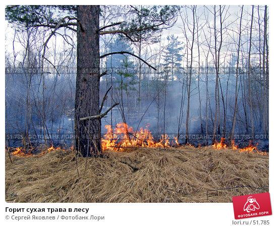 Горит сухая трава в лесу, фото № 51785, снято 13 апреля 2007 г. (c) Сергей Яковлев / Фотобанк Лори