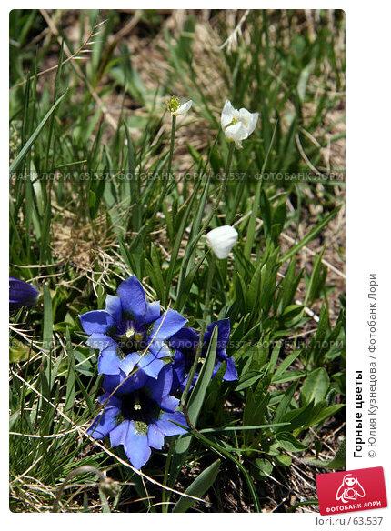 Горные цветы, фото № 63537, снято 17 июня 2007 г. (c) Юлия Кузнецова / Фотобанк Лори
