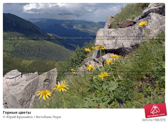 Горные цветы, фото № 160573, снято 29 июня 2007 г. (c) Юрий Брыкайло / Фотобанк Лори