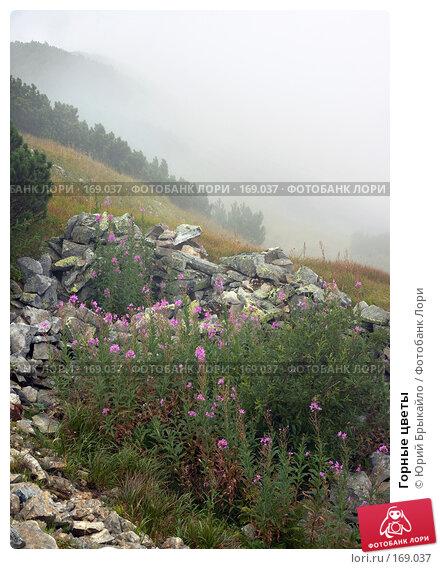 Горные цветы, фото № 169037, снято 25 августа 2007 г. (c) Юрий Брыкайло / Фотобанк Лори