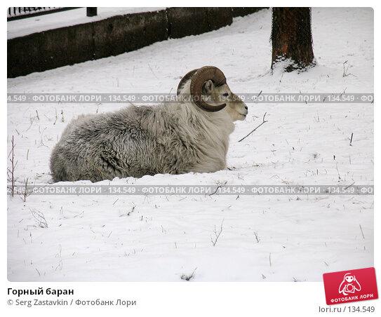 Купить «Горный баран», фото № 134549, снято 7 ноября 2004 г. (c) Serg Zastavkin / Фотобанк Лори