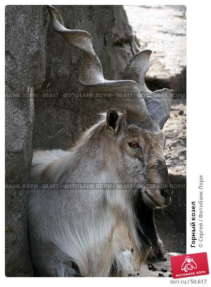 Горный козел, фото № 50617, снято 6 июня 2007 г. (c) Сергей / Фотобанк Лори