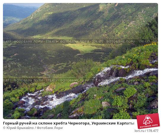 Купить «Горный ручей на склоне хребта Черногора, Украинские Карпаты», фото № 178477, снято 26 июня 2005 г. (c) Юрий Брыкайло / Фотобанк Лори