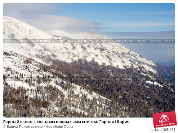 Горный склон с соснами покрытыми снегом. Горная Шория, фото № 205165, снято 17 февраля 2008 г. (c) Вадим Пономаренко / Фотобанк Лори