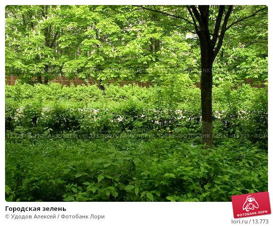 Городская зелень, фото № 13773, снято 22 мая 2005 г. (c) Удодов Алексей / Фотобанк Лори