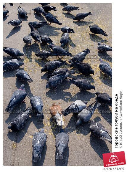 Городские голуби на обеде, фото № 31997, снято 31 марта 2007 г. (c) Юрий Синицын / Фотобанк Лори