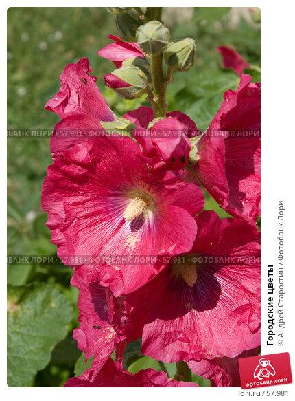 Городские цветы, фото № 57981, снято 30 июня 2007 г. (c) Андрей Старостин / Фотобанк Лори