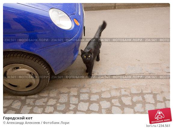 Городской кот, эксклюзивное фото № 234561, снято 7 мая 2007 г. (c) Александр Алексеев / Фотобанк Лори