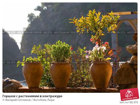 Горшки с растениями в контражуре, фото № 60373, снято 10 июня 2007 г. (c) Валерий Ситников / Фотобанк Лори