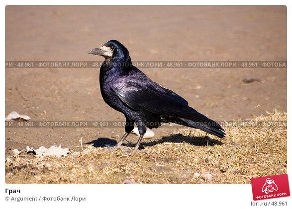 Грач, фото № 48961, снято 1 апреля 2007 г. (c) Argument / Фотобанк Лори