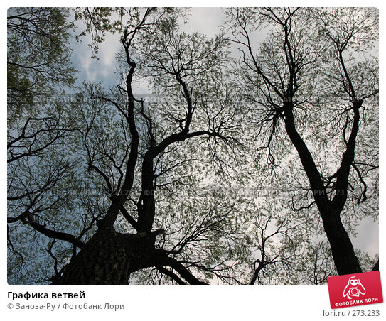 Графика ветвей, фото № 273233, снято 1 мая 2008 г. (c) Заноза-Ру / Фотобанк Лори