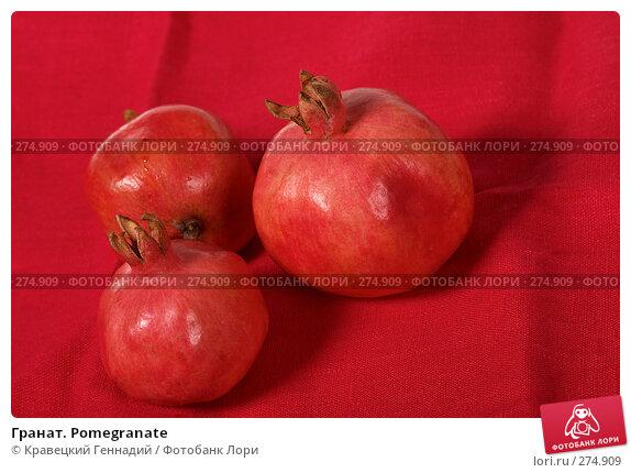 Гранат. Pomegranate, фото № 274909, снято 4 октября 2004 г. (c) Кравецкий Геннадий / Фотобанк Лори
