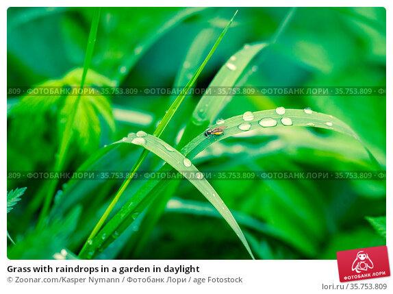 Grass with raindrops in a garden in daylight. Стоковое фото, фотограф Zoonar.com/Kasper Nymann / age Fotostock / Фотобанк Лори
