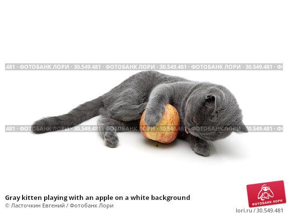 Купить «Gray kitten playing with an apple on a white background», фото № 30549481, снято 13 мая 2014 г. (c) Ласточкин Евгений / Фотобанк Лори