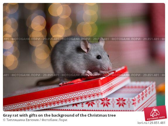 Купить «Gray rat with gifts on the background of the Christmas tree», фото № 29851481, снято 19 января 2019 г. (c) Типляшина Евгения / Фотобанк Лори