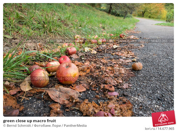 Купить «green close up macro fruit», фото № 14677965, снято 21 февраля 2019 г. (c) PantherMedia / Фотобанк Лори