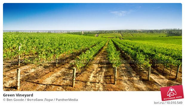 Купить «Green Vineyard», фото № 10010549, снято 25 апреля 2019 г. (c) PantherMedia / Фотобанк Лори