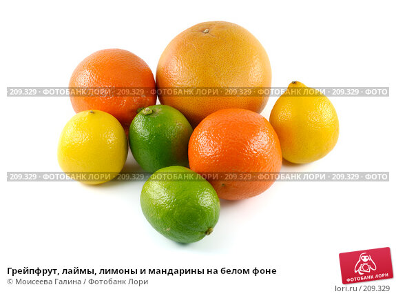 Грейпфрут, лаймы, лимоны и мандарины на белом фоне, фото № 209329, снято 19 февраля 2008 г. (c) Моисеева Галина / Фотобанк Лори