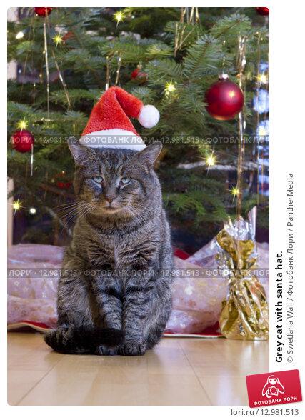 Купить «Grey cat with santa hat.», фото № 12981513, снято 16 июля 2019 г. (c) PantherMedia / Фотобанк Лори