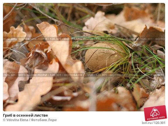 Купить «Гриб в осенней листве», фото № 120301, снято 7 октября 2007 г. (c) Vdovina Elena / Фотобанк Лори
