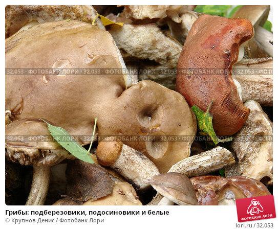 Грибы: подберезовики, подосиновики и белые, фото № 32053, снято 2 сентября 2006 г. (c) Крупнов Денис / Фотобанк Лори