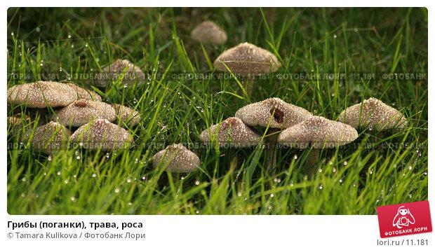 Купить «Грибы (поганки), трава, роса», фото № 11181, снято 17 октября 2006 г. (c) Tamara Kulikova / Фотобанк Лори