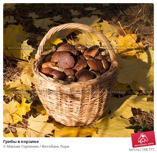 Грибы в корзине, фото № 155777, снято 19 октября 2004 г. (c) Максим Горпенюк / Фотобанк Лори