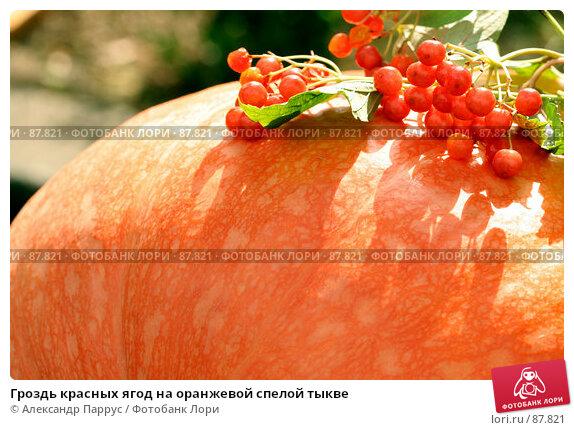 Гроздь красных ягод на оранжевой спелой тыкве, фото № 87821, снято 8 сентября 2007 г. (c) Александр Паррус / Фотобанк Лори