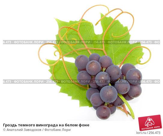 Гроздь темного винограда на белом фоне, фото № 256473, снято 1 октября 2006 г. (c) Анатолий Заводсков / Фотобанк Лори