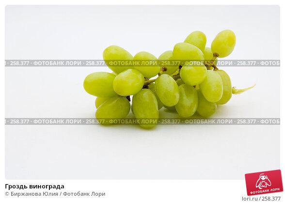 Гроздь винограда, фото № 258377, снято 20 апреля 2008 г. (c) Биржанова Юлия / Фотобанк Лори