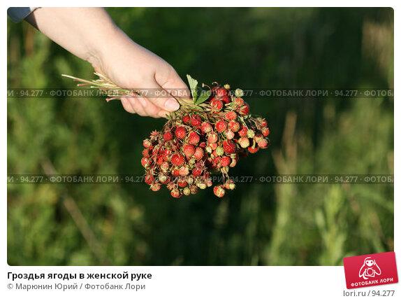 Гроздья ягоды в женской руке, фото № 94277, снято 1 июля 2007 г. (c) Марюнин Юрий / Фотобанк Лори