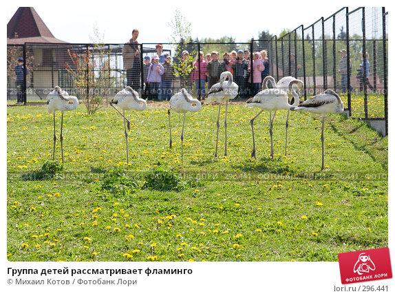 Купить «Группа детей рассматривает фламинго», фото № 296441, снято 13 мая 2008 г. (c) Михаил Котов / Фотобанк Лори