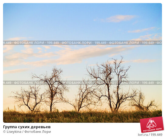 Группа сухих деревьев, фото № 199449, снято 10 августа 2007 г. (c) Liseykina / Фотобанк Лори