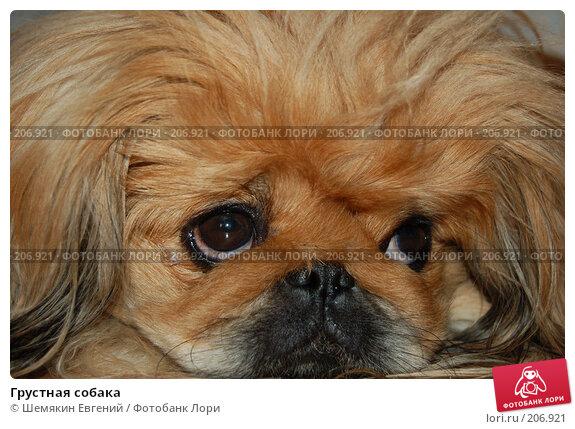 Купить «Грустная собака», фото № 206921, снято 8 марта 2007 г. (c) Шемякин Евгений / Фотобанк Лори