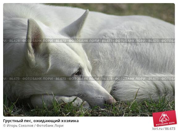 Грустный пес, ожидающий хозяина, фото № 86673, снято 23 мая 2017 г. (c) Игорь Соколов / Фотобанк Лори