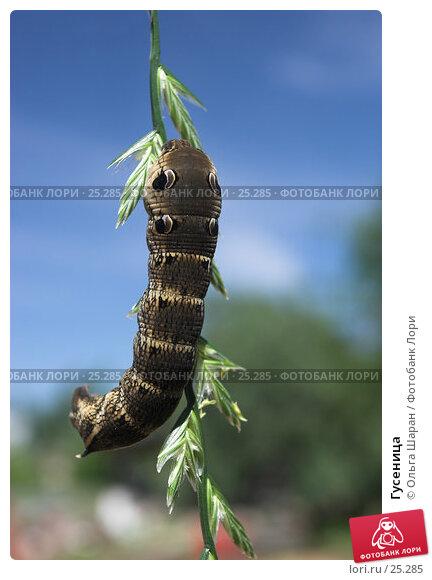Гусеница, фото № 25285, снято 18 июля 2006 г. (c) Ольга Шаран / Фотобанк Лори