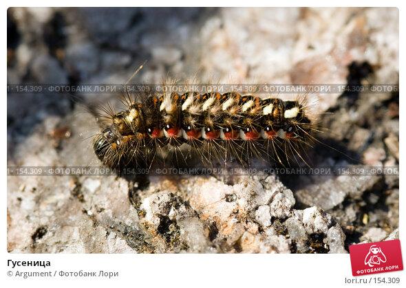 Гусеница, фото № 154309, снято 10 августа 2007 г. (c) Argument / Фотобанк Лори