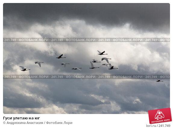 Купить «Гуси улетаю на юг», фото № 241749, снято 16 сентября 2007 г. (c) Андрюхина Анастасия / Фотобанк Лори