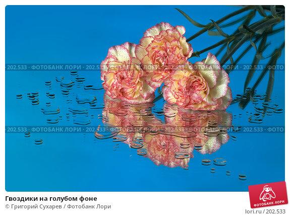 Купить «Гвоздики на голубом фоне», фото № 202533, снято 27 ноября 2006 г. (c) Григорий Сухарев / Фотобанк Лори