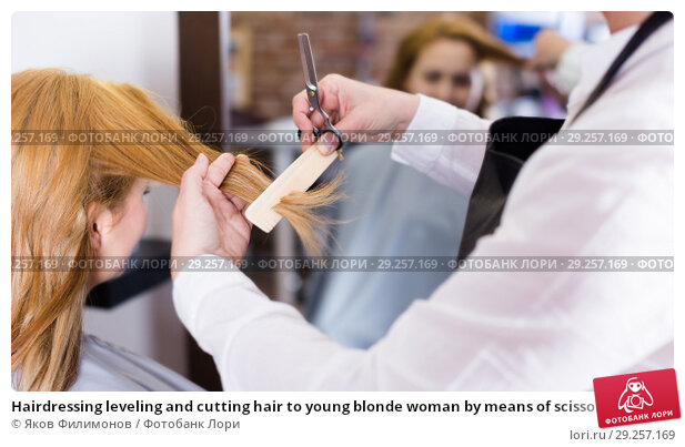 Купить «Hairdressing leveling and cutting hair to young blonde woman by means of scissors and hairbrush», фото № 29257169, снято 7 марта 2017 г. (c) Яков Филимонов / Фотобанк Лори