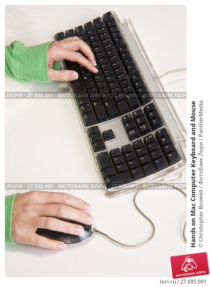 Купить «Hands on Mac Computer Keyboard and Mouse», фото № 27595981, снято 19 февраля 2019 г. (c) PantherMedia / Фотобанк Лори